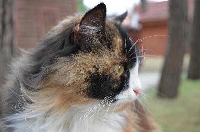 Кошки 3