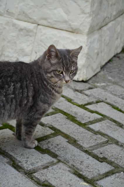 Кошки 6