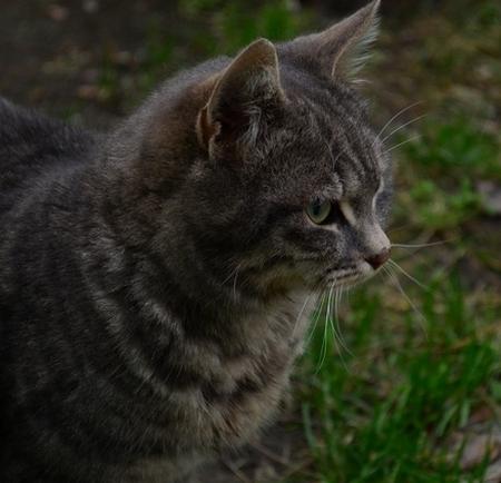 Кошки 7
