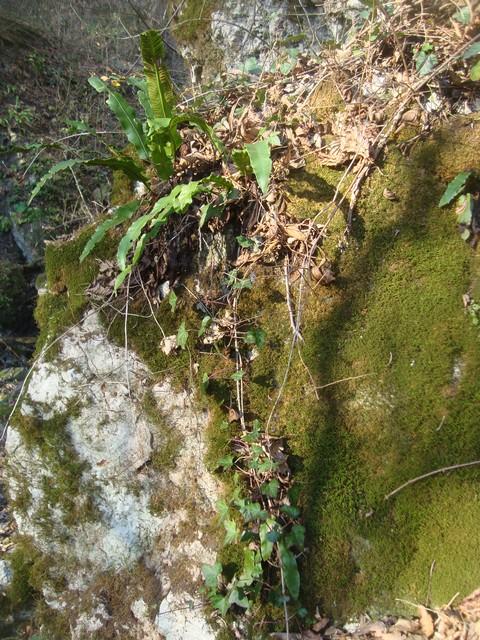 К водопаду Желаний 6