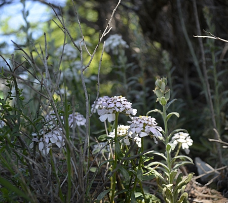 Отдых на природе в Геленджике