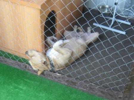 Гостиница для собак и кошек Карандаши в Геленджике 1