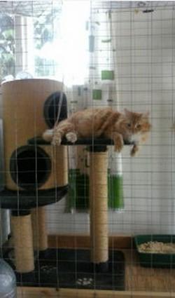 Гостиница для собак и кошек Карандаши в Геленджике 2