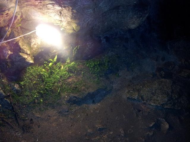 Растения в пещере