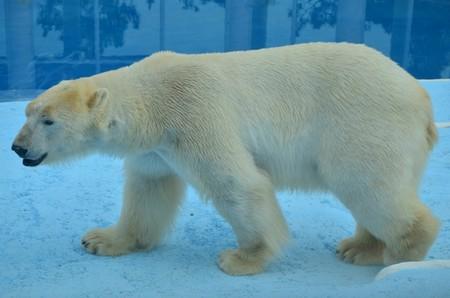 Сафари парк белые медведи в Геленджике