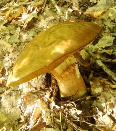 Геленджик в октябре грибы