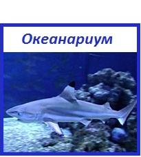 Океанариум Архипо-Осиповки