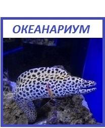 Океанариум Кабардинки