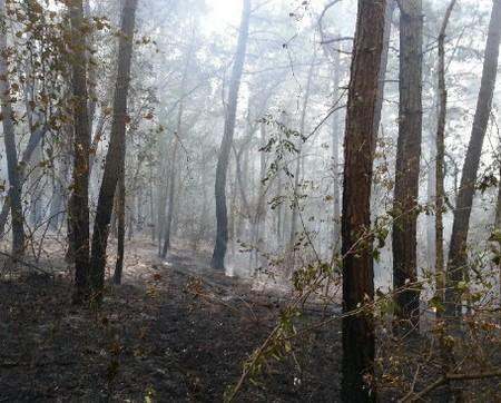 Загорание лесной подстилки