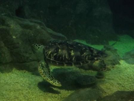Подводный туннель-аквариум