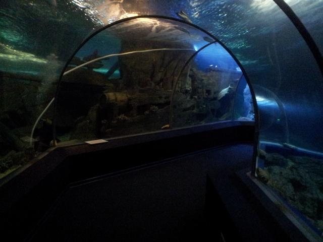 Туннель фото 2