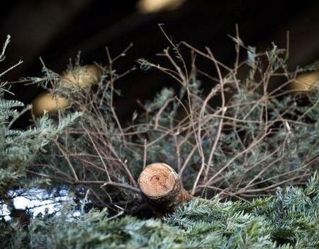 Ненужные елки