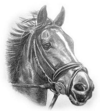 Лошади в Геленджике