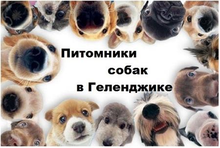 Питомники собак в Геленджике
