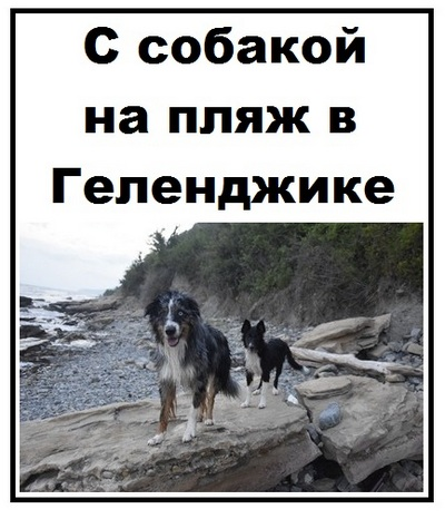 С собакой на пляж в Геленджике