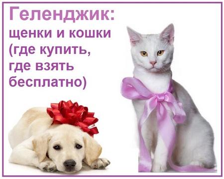 Щенки и кошки