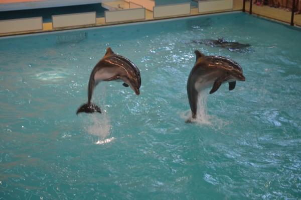 Дельфинарий 2