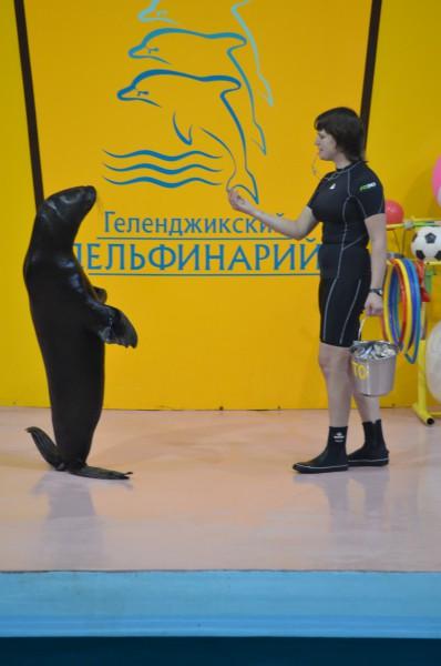 Дельфинарий 4