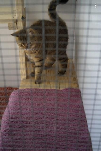 Передержка кошек в Геленджике 4