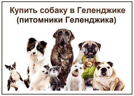 Купить собаку в Геленджике