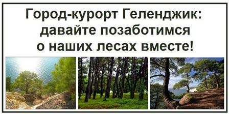 Город-курорт Геленджик давайте позаботимся о наших лесах вместе
