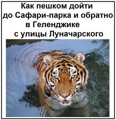 Как пешком дойти до Сафари-парка и обратно в Геленджике с улицы Луначарского
