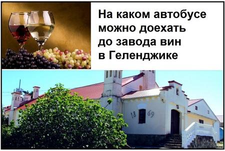 На каком автобусе можно доехать до завода вин в Геленджике