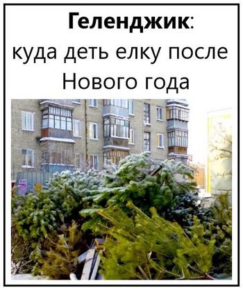 Геленджик куда деть елку после Нового года