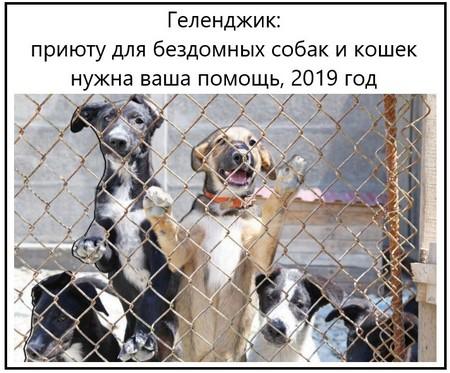 Геленджик приюту для бездомных собак и кошек нужна ваша помощь, 2019 год