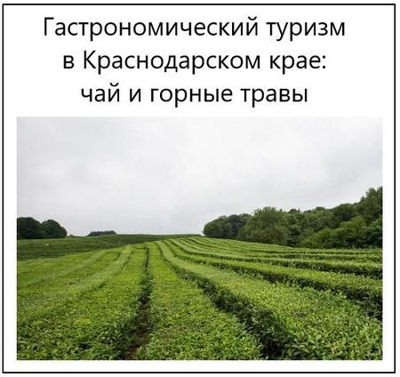 Гастрономический туризм в Краснодарском крае чай и горные травы