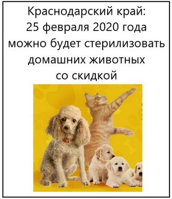 Краснодарский край 25 февраля 2020 года можно будет стерилизовать домашних животных со скидкой
