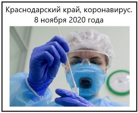 Краснодарский край, коронавирус. 8 ноября 2020 года