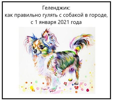 Геленджик как правильно гулять с собакой в городе, с 1 января 2021 года