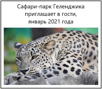 Сафари-парк Геленджика приглашает в гости, январь 2020 года